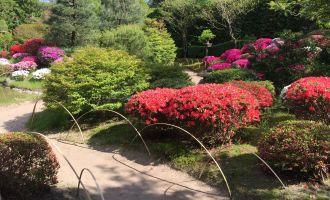 Blühende Azaleen im Japanischen Bonsaigarten Ferch, Foto: Schwielowsee Tourismus/Spaak